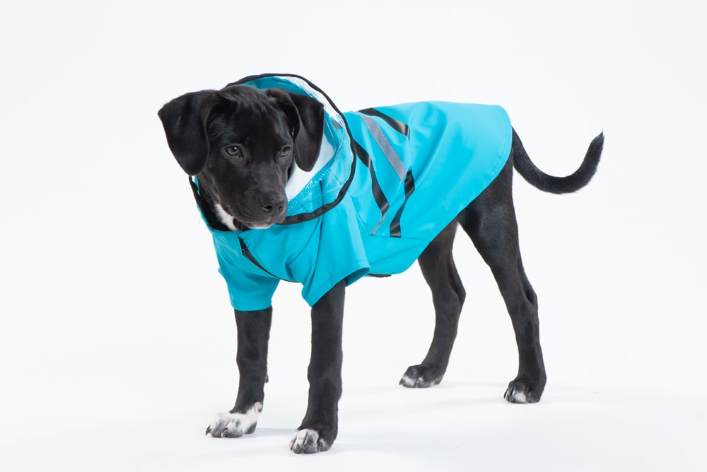Fall Dog Fashion Wear
