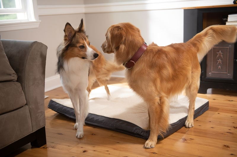 Commercial Pet Product Photography