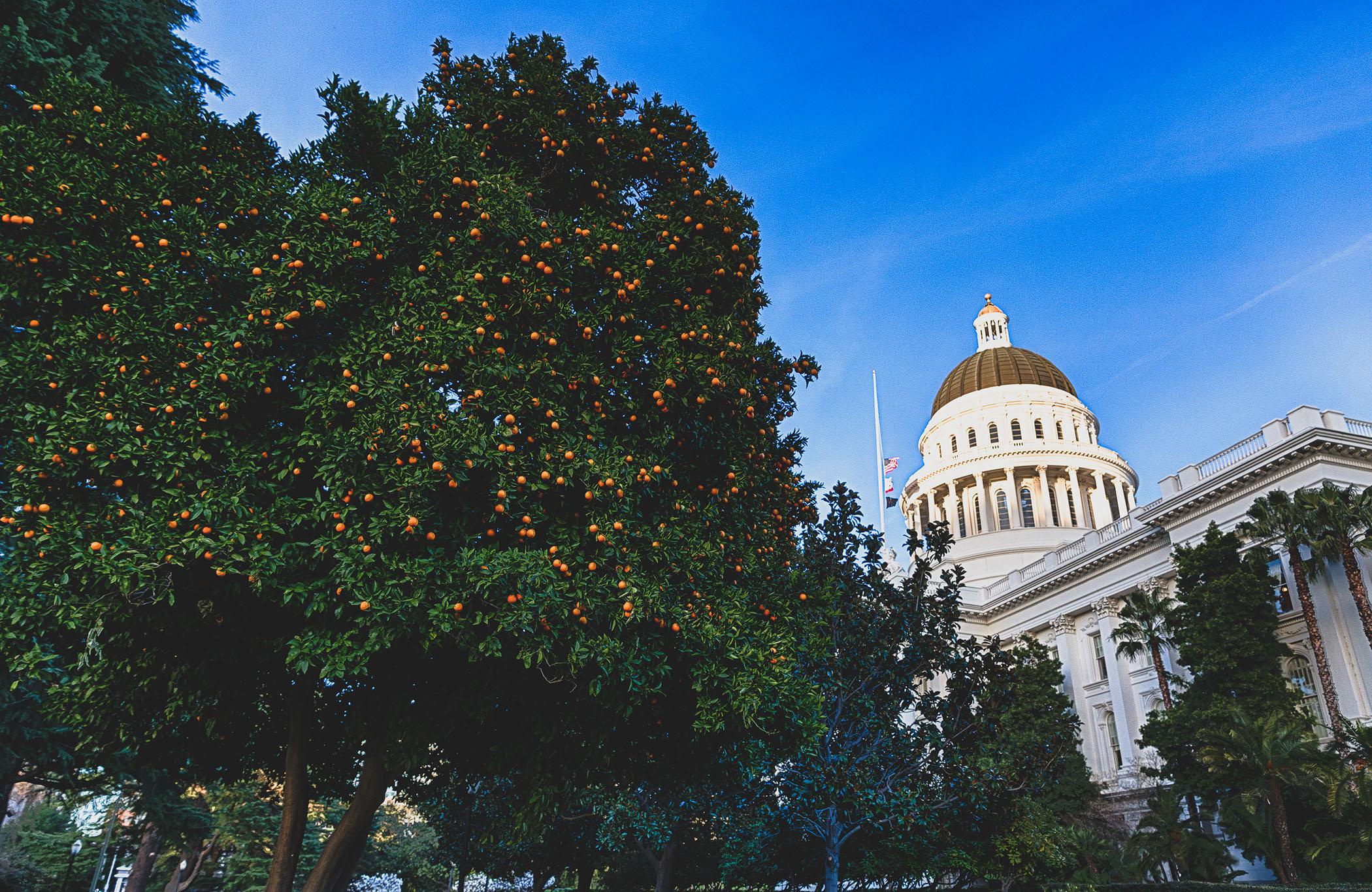 Capitol Citrus