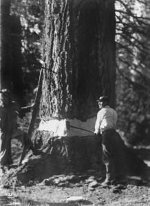 porters-tree-lr