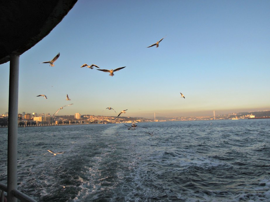 Our Seagull Escort