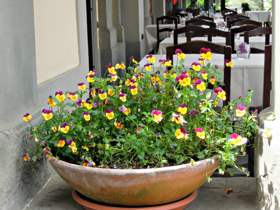 Flowers at La Loggia