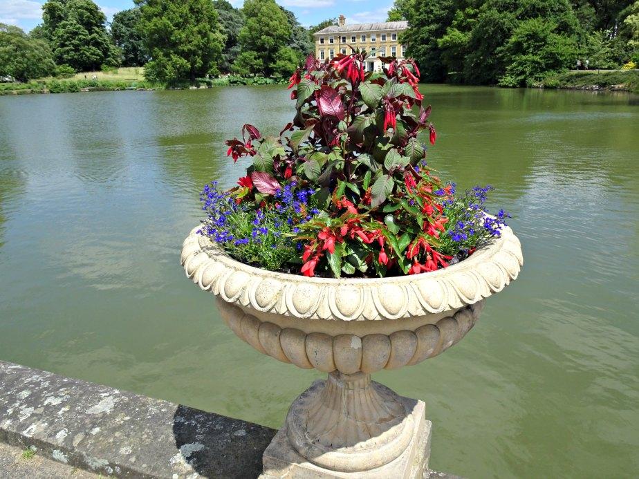 Flowers near the Lake, Kew Gardens