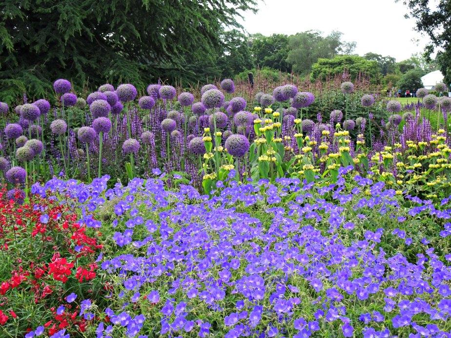 Mauve Flowers at Kew Gardens