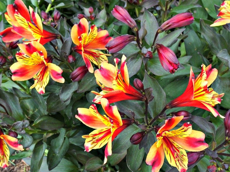 Orange & Yellow Flowers, Kew Gardens