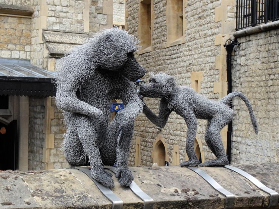 Baboons at the Tower