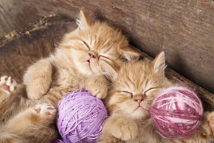 kitten / cat adoption checklist