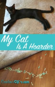 hoarding behavior in cats
