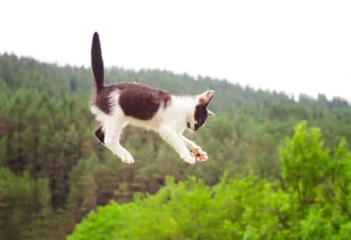 Can a cat survive a fall?