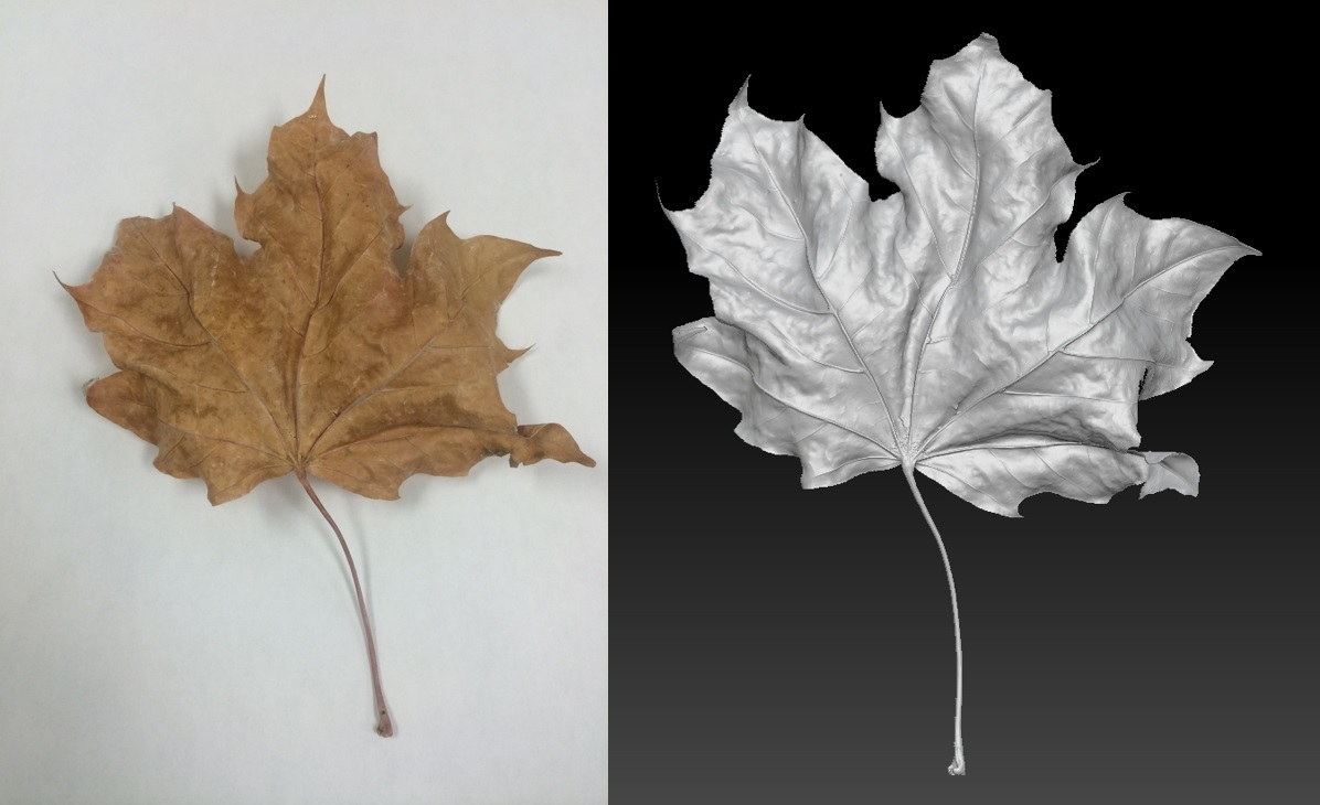 Bolton Works Maple Leaf (1)