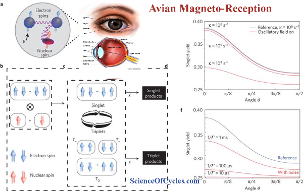 SPECIAL REPORT: Study Shows Weakened Magnetic Field Has No Effect on Avian Compass