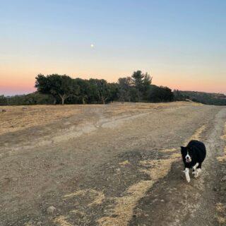 Moon (and my) shadow 🐾