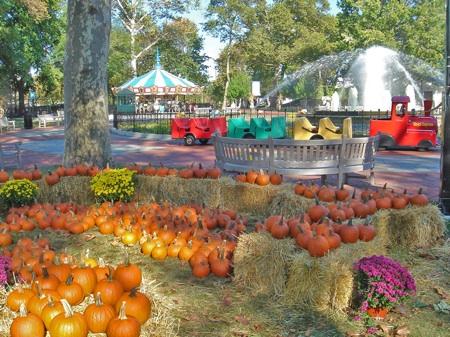 pumpkin-patch-franklin-square