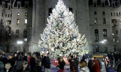 city-hall-tree-lighting