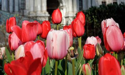 floral pop up dilworth park