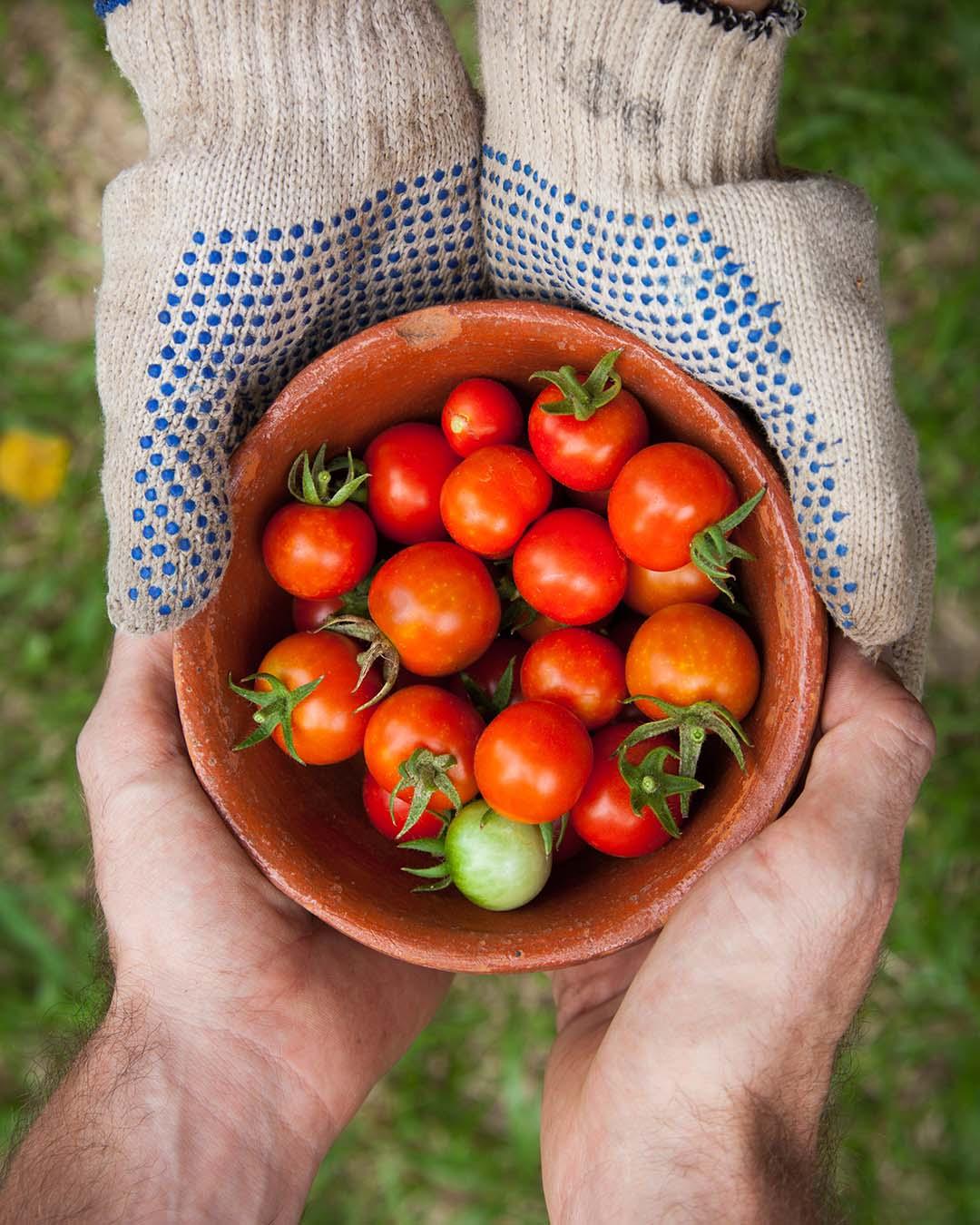 phs harvest