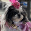 project ruffway puppy fashion showproject ruffway puppy fashion show