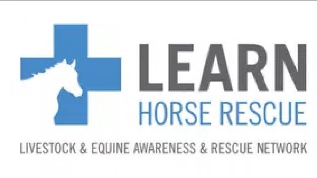 L.E.A.R.N horse rescue