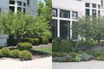 naperville-hinsdale-dupage-gardeners-gardening-service-_1075
