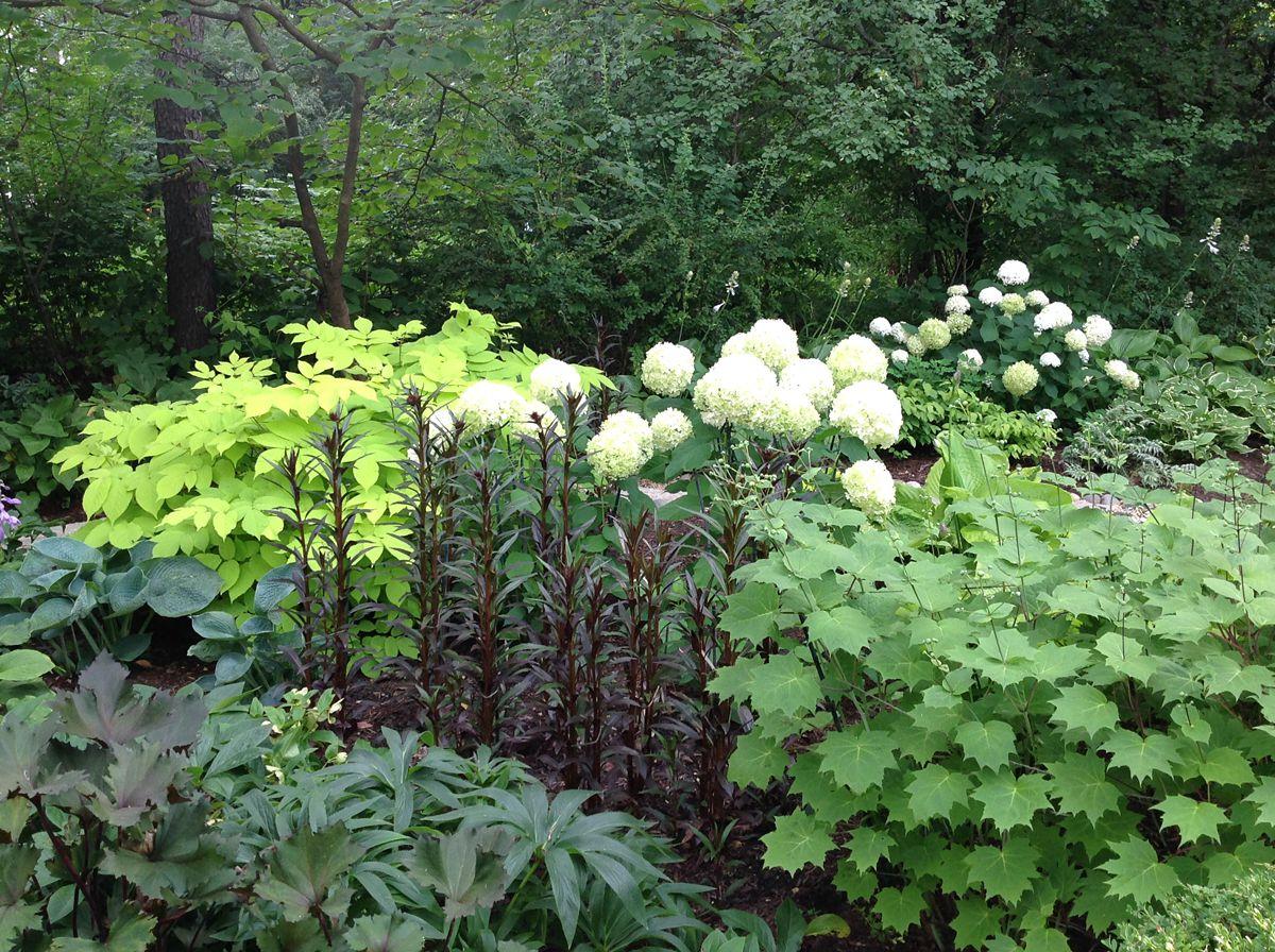 Captivating Shade Gardens