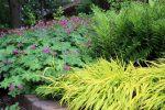 naperville-hinsdale-dupage-gardeners-gardening-service-_1223