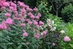 naperville-hinsdale-dupage-gardeners-gardening-service-_1231