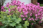 naperville-hinsdale-dupage-gardeners-gardening-service-_1235