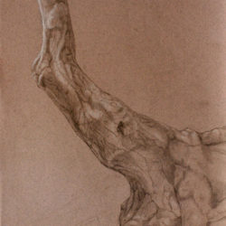 Catherine Lucas graphite sketch of tree branch