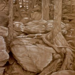 Catherine Lucas Graphite/chalk drawing of woods