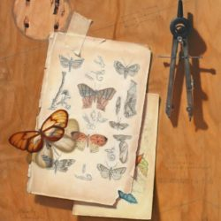 Catherine Lucas Oil painting of Butterfly and Moths