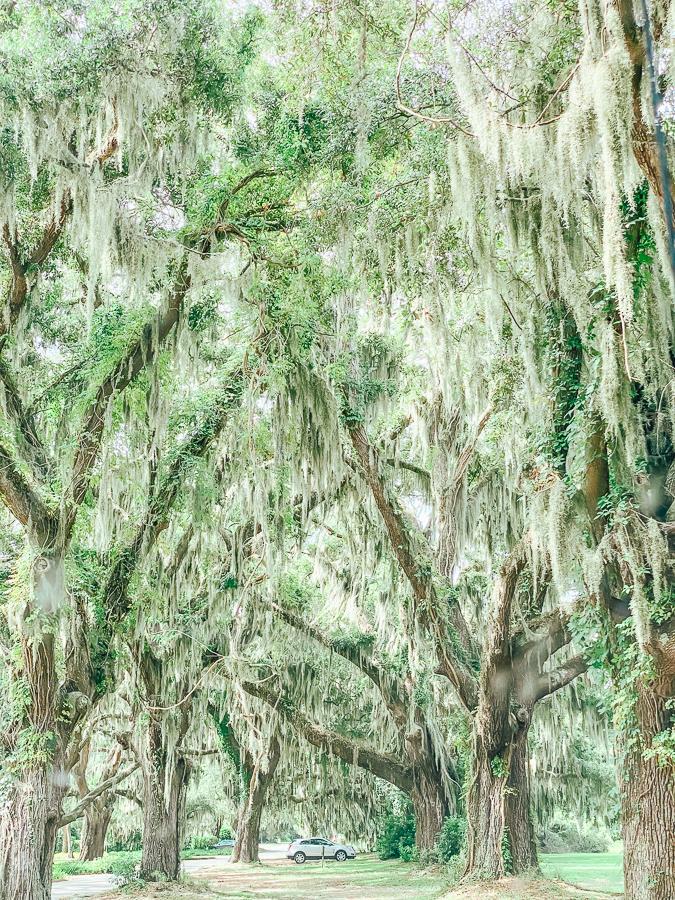 30A Mama Jekyll Island oaks