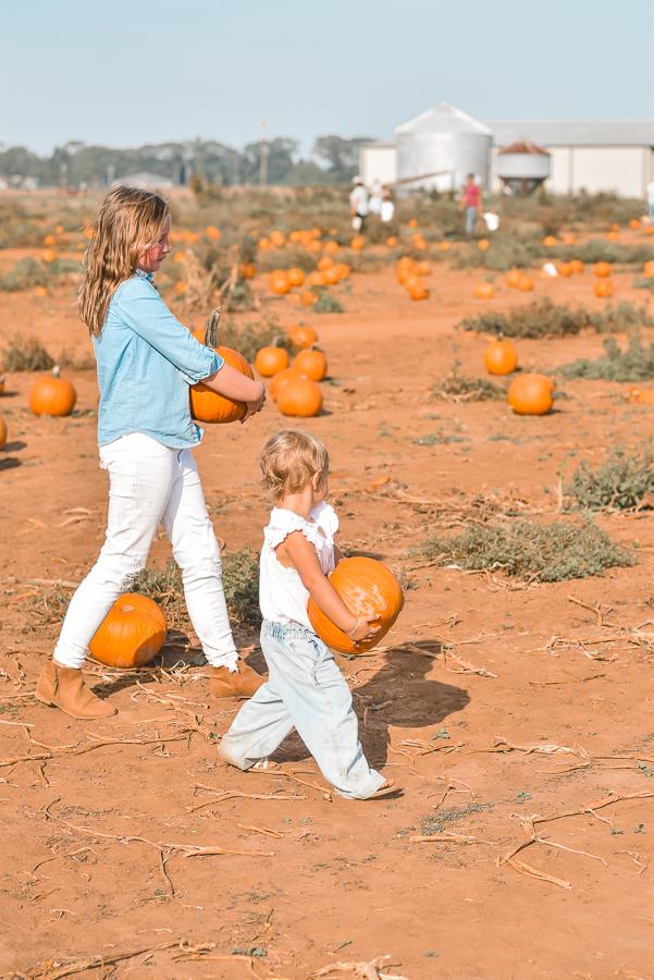 30A Mama Pumpkin Patch- Holland Farms