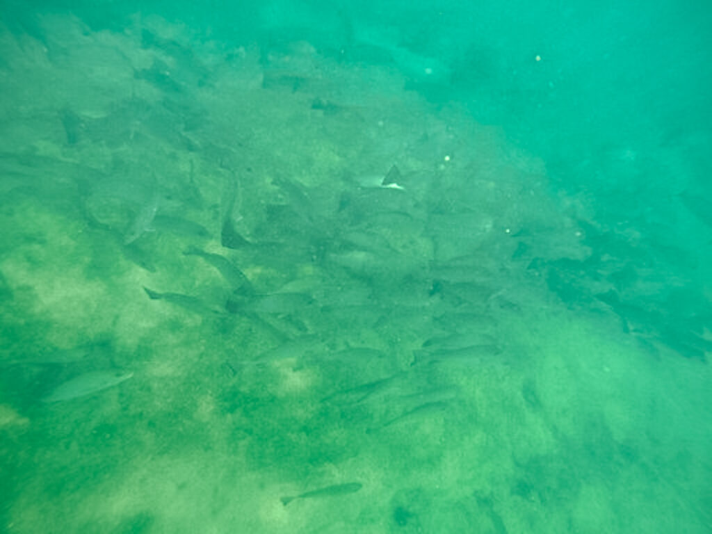 30A Mama Travel - Swim with the Manatees in Crystal RIver