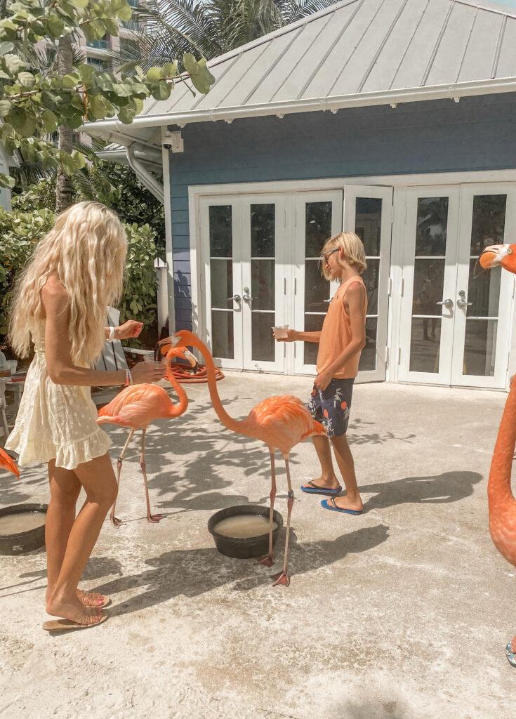 Flamingo encounter Baha Mar
