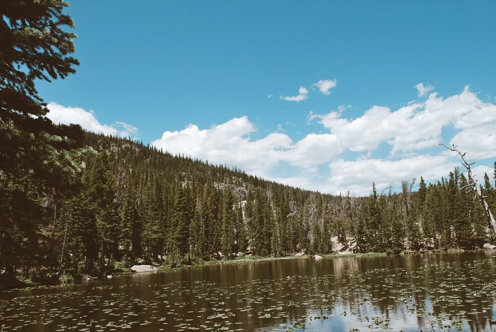 Nymph lake surrounded by trees and lily pads outside of Estes Park CO