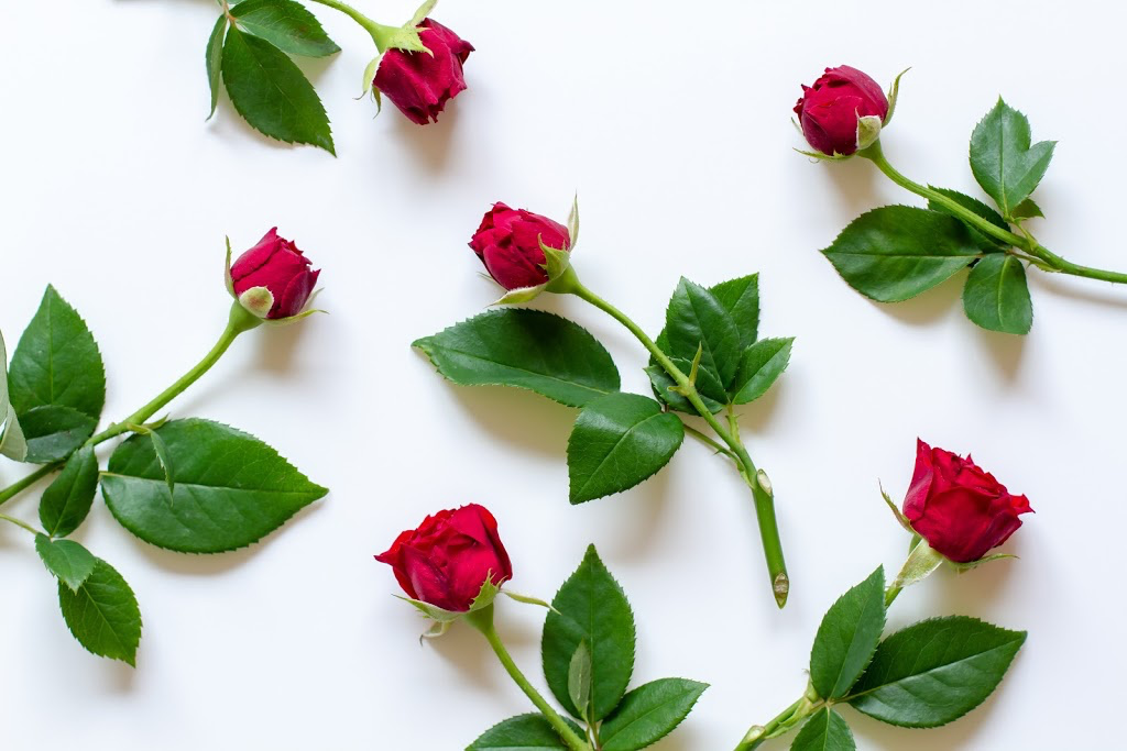 scattered roses
