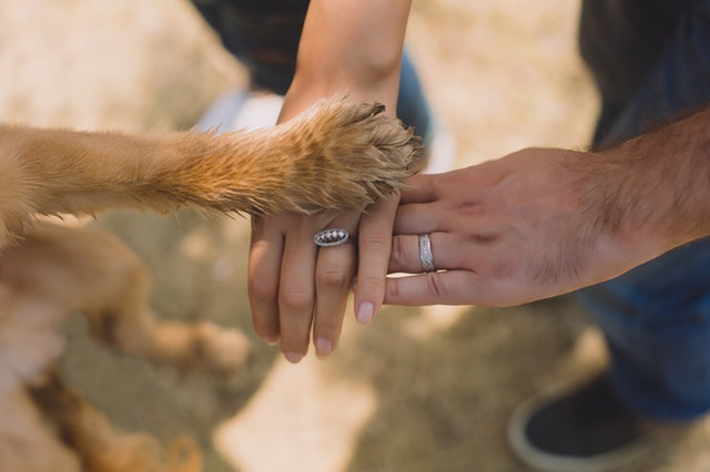 outdoors, two hands and a paw