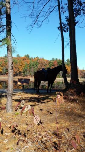 horse a (Medium)