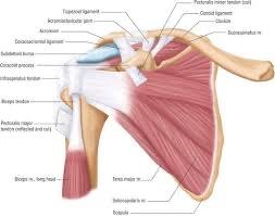 Chiropractic can help shoulder pain.