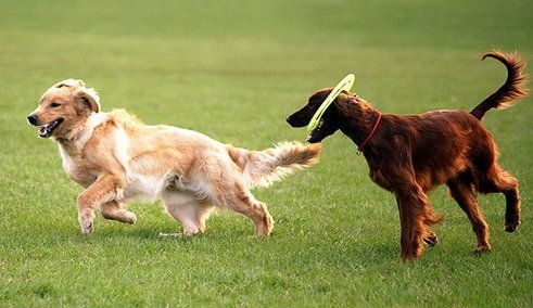 Dog Park Coming to Silver Spring