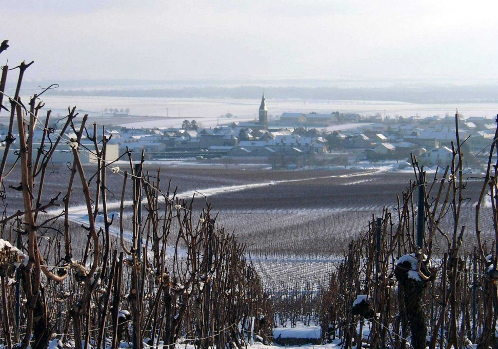 Champagne Barnaut's Bouzy in the snow