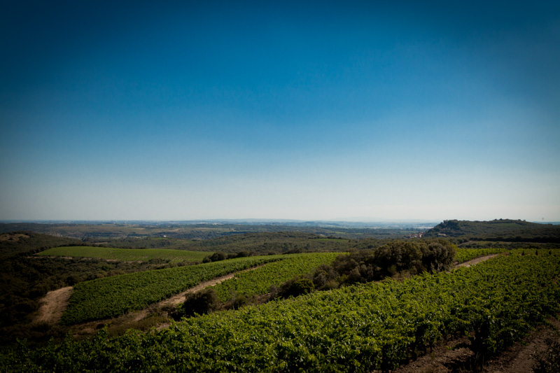 Domaine Ollier-Taillefer vines