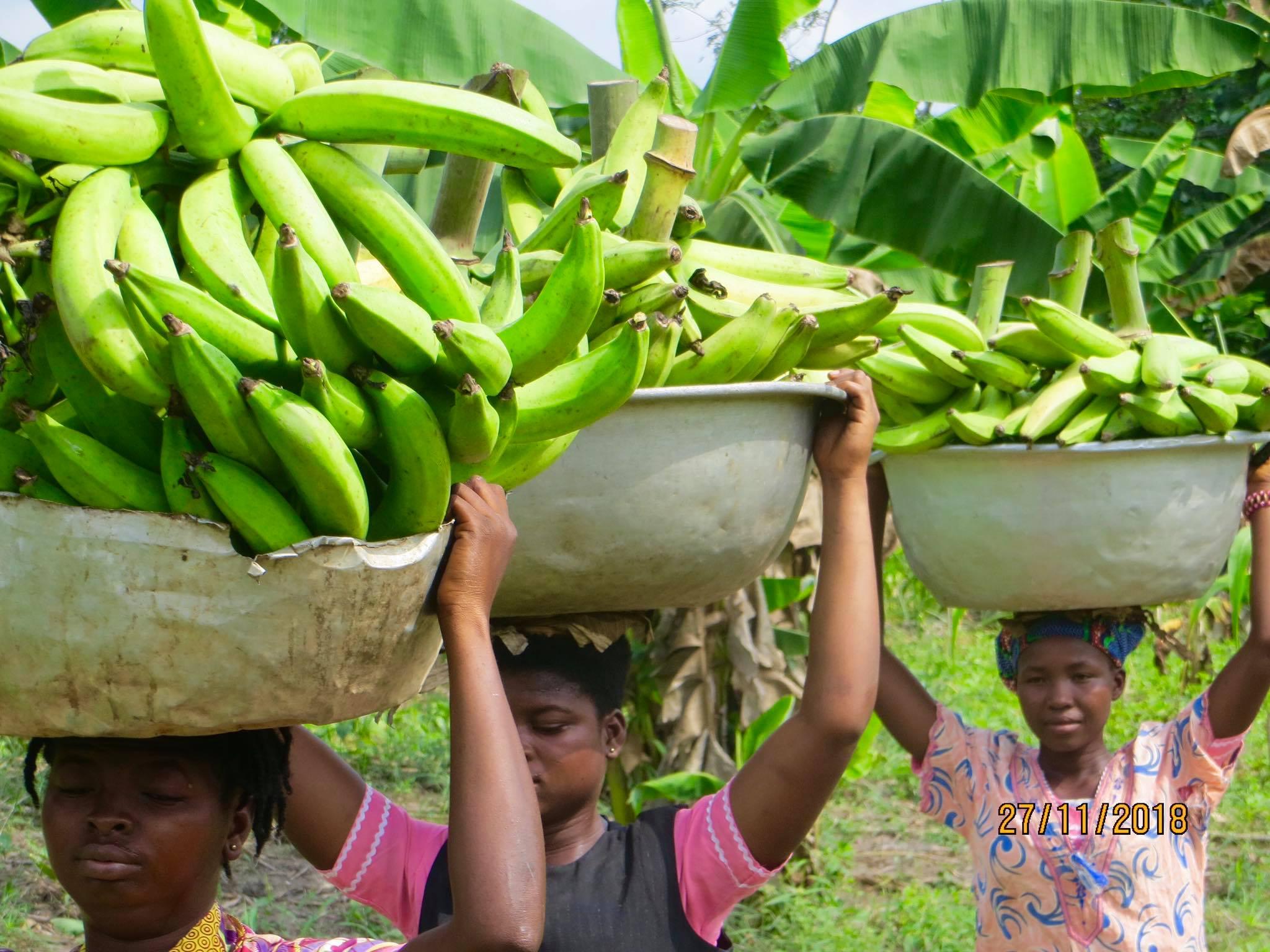 King Jesus Farm - Ghana