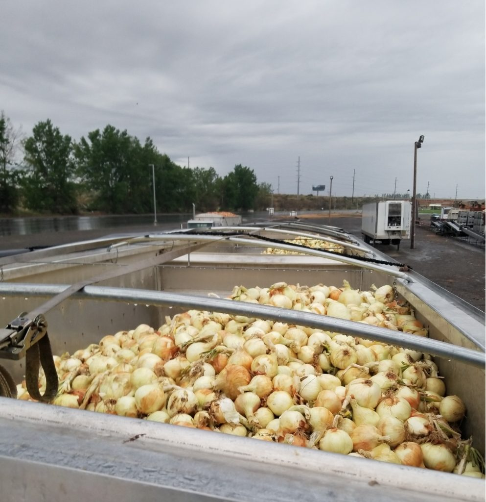 A truck of onions