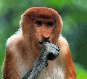 concerned-monkey