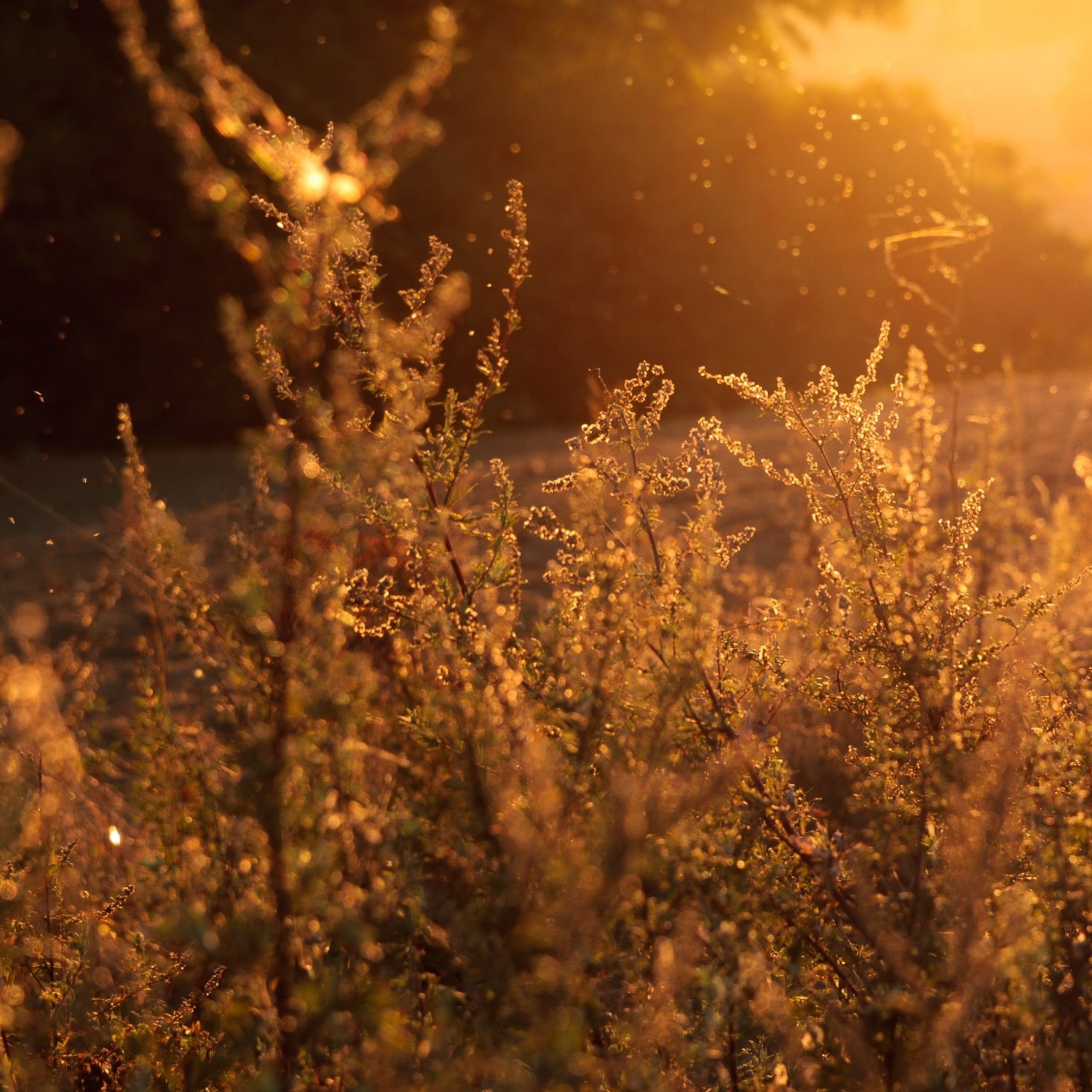 How Seasonal Allergies Affect your Eyes