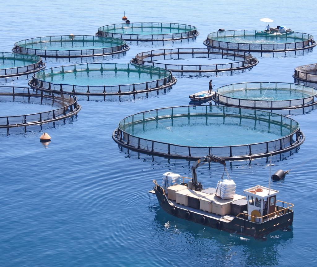 An aquafarm raising farm-raised seafood
