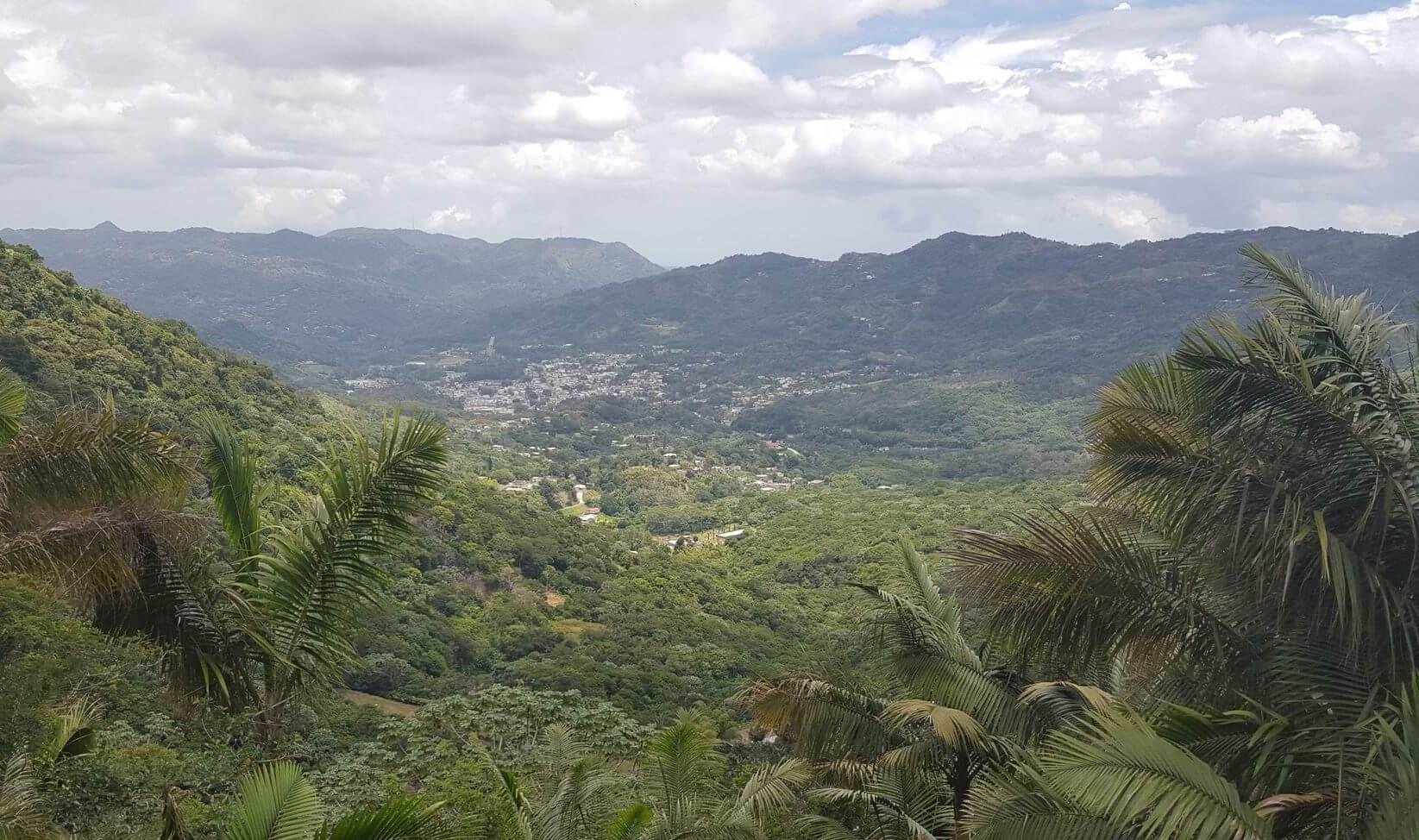 Suministrada por Bosque Modelo de Puerto Rico (Facebook).