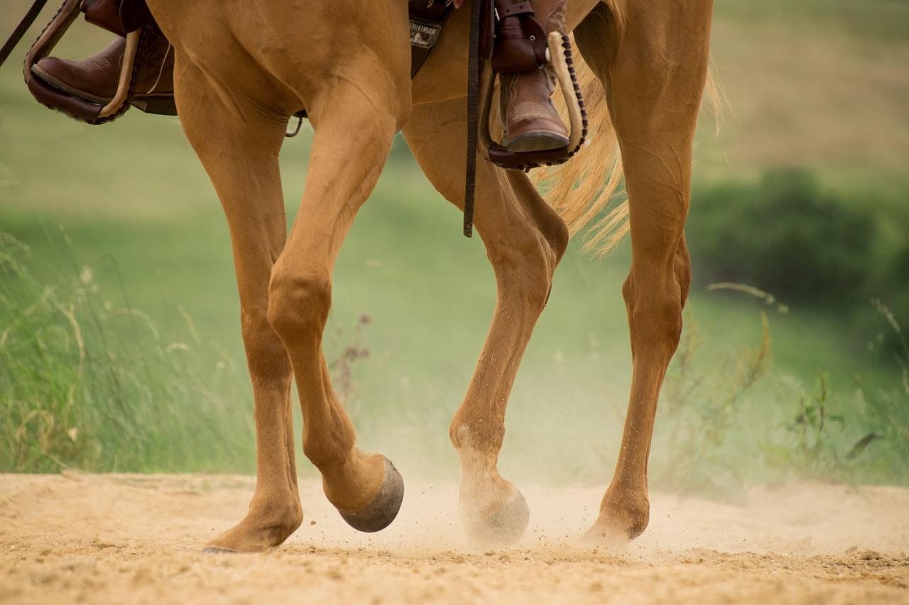 Legs of western horse