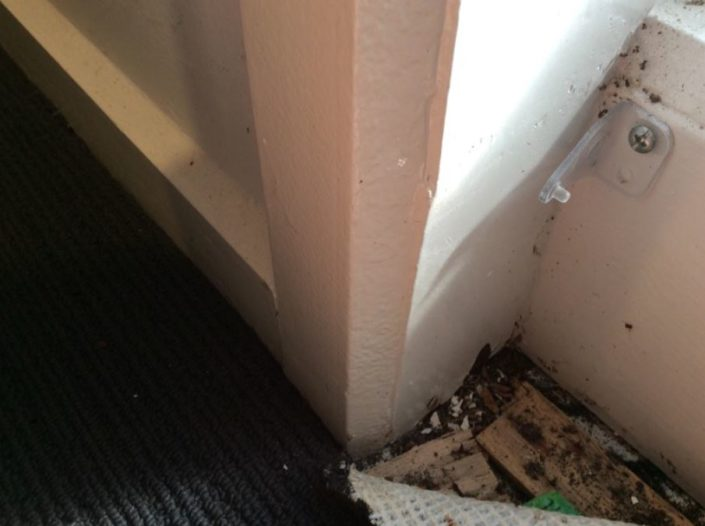 Water damage to second bedroom at base of wall next to window area